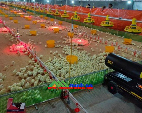 Sau khi xem máy sưởi ấm cho gà bạn muốn mua ngay lập tức
